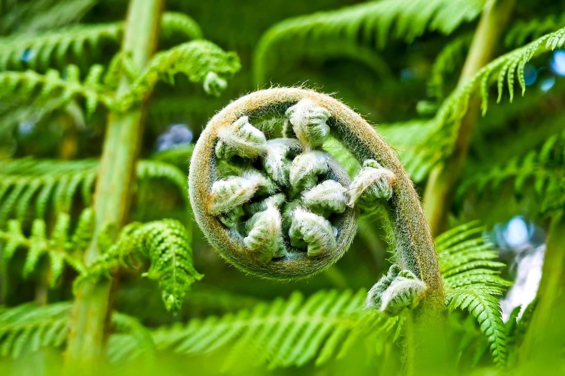 palm-fern PixaBay (003)